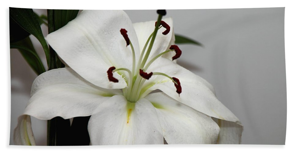 Lily Hand Towel featuring the photograph White Lily In Macro by Carole-Anne Fooks