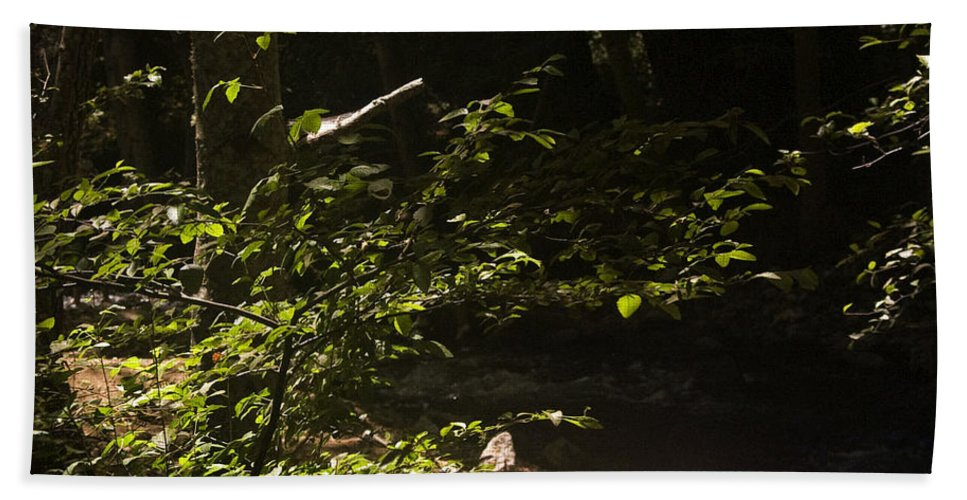 Print Hand Towel featuring the photograph 654 Cf Solitary Stream by Chris Berry