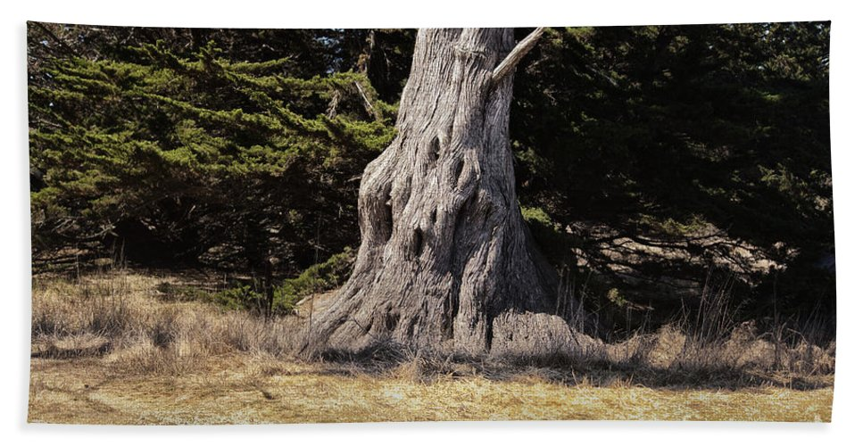 Print Hand Towel featuring the photograph 668 Det The Old Tree by Chris Berry