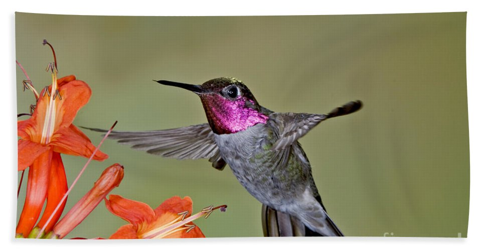 Calypte Anna Hand Towel featuring the photograph Annas Hummingbird by Anthony Mercieca