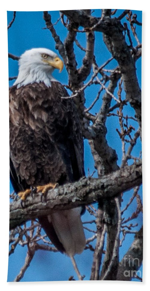 Bald Eagle Hand Towel featuring the photograph Bald Eagle by Ronald Grogan