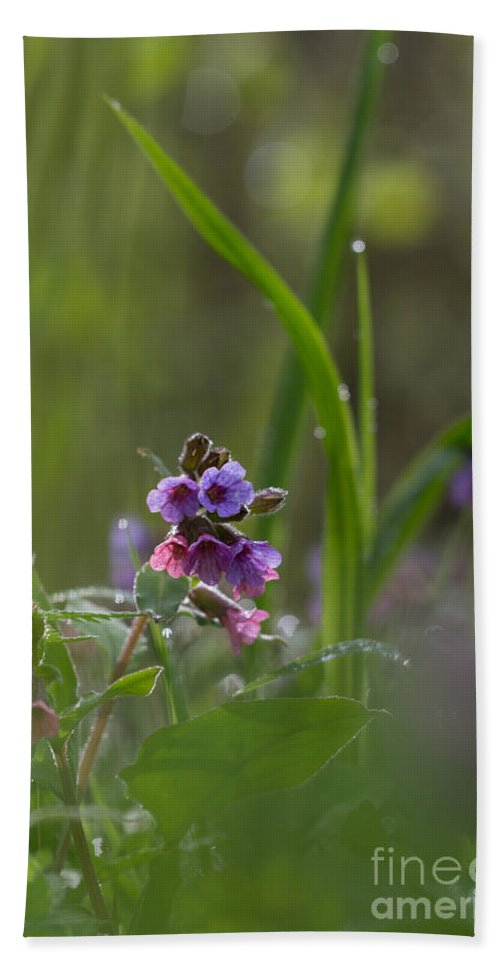 Bulgaria Hand Towel featuring the photograph Common Lungwort by Jivko Nakev