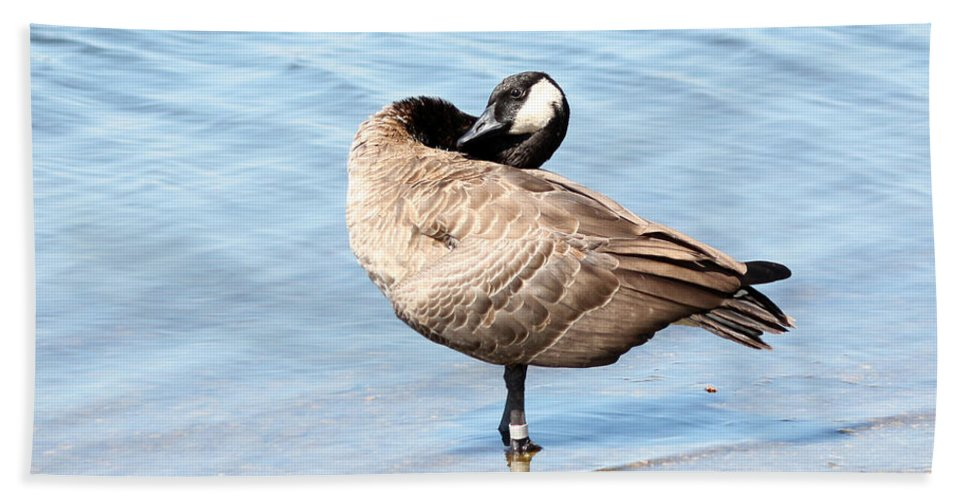 Wildlife Hand Towel featuring the photograph Goose by Lori Tordsen