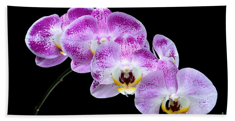 Flower Bath Sheet featuring the photograph Moon's Orchid by Antoni Halim