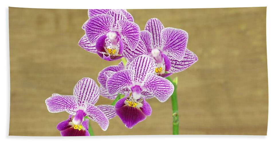 Orchid Hand Towel featuring the photograph Purple Orchid by Rudy Umans