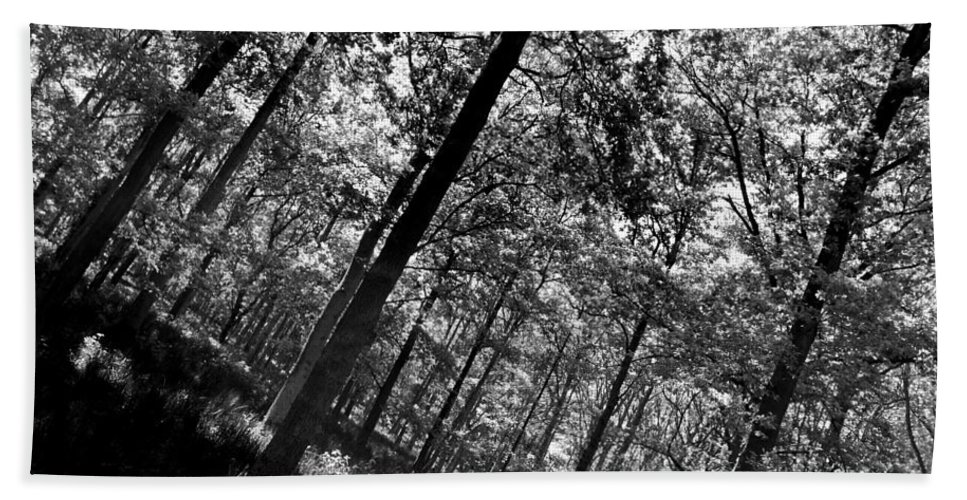 Tree Bath Sheet featuring the photograph The Forest by David Pyatt
