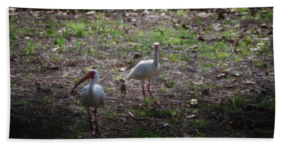 Checking Out My Yard Hand Towel featuring the photograph White Ibis by Robert Floyd
