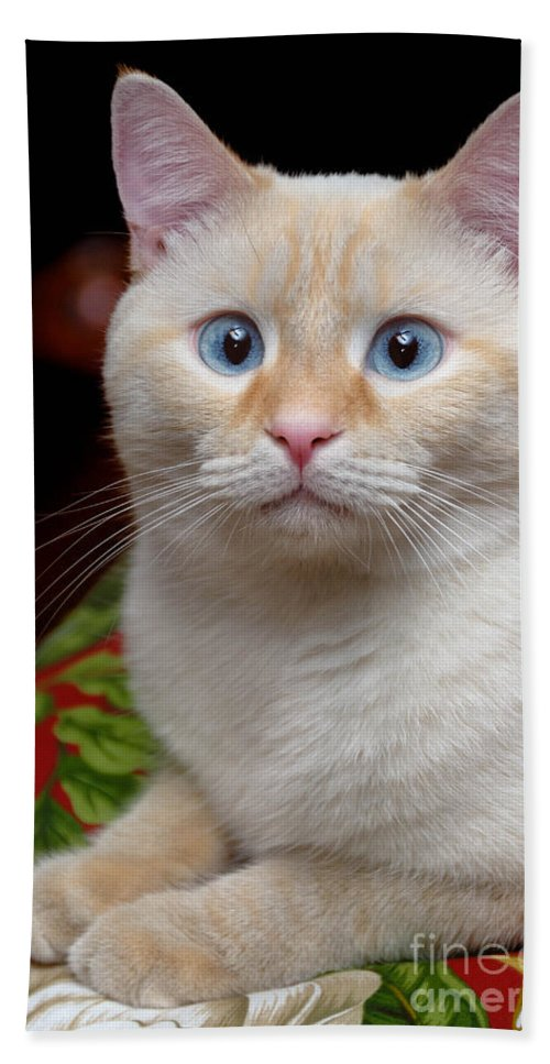 Blue Eyes Bath Sheet featuring the photograph Flame Point Siamese Cat by Amy Cicconi