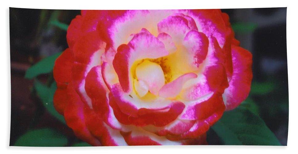 Home Grown Bath Sheet featuring the photograph Rose by Robert Floyd