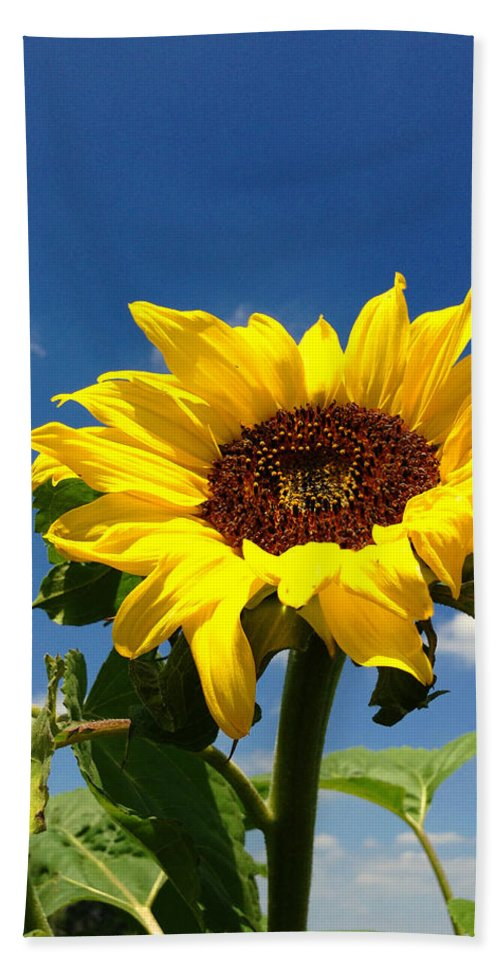 Blue Hand Towel featuring the photograph Sunflower by Les Cunliffe
