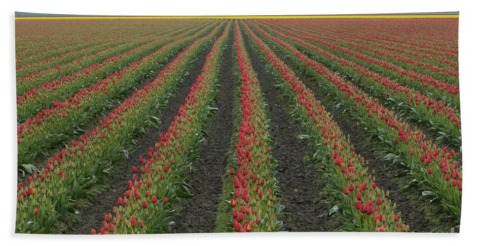 Tulip Field Hand Towel featuring the photograph Tulip Field by John Shaw