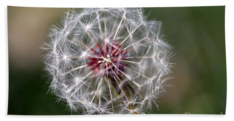 Abstract Bath Sheet featuring the photograph Dandelion Seed Head by Henrik Lehnerer