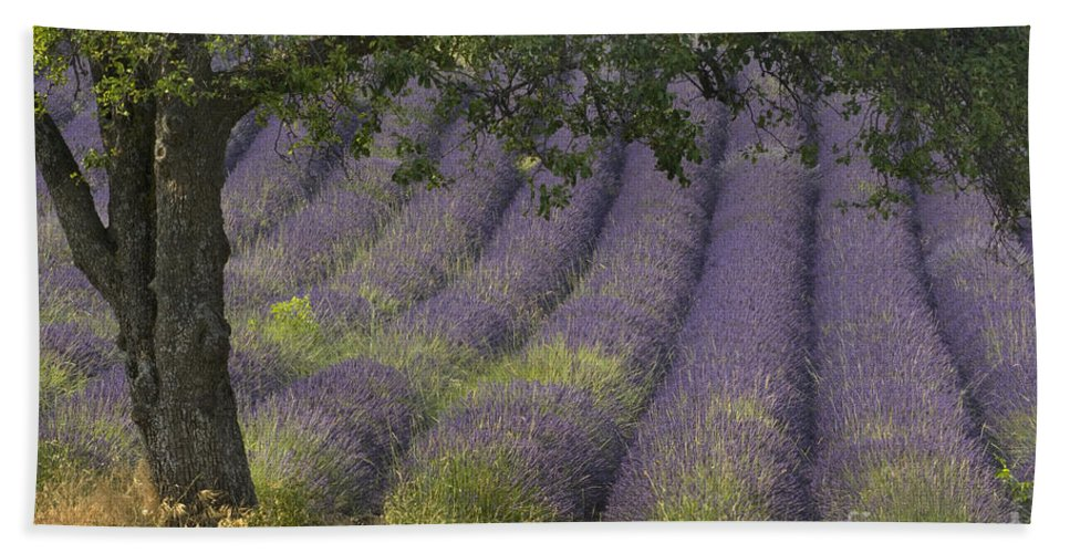 Lavender Bath Sheet featuring the photograph Lavender Field, France by John Shaw