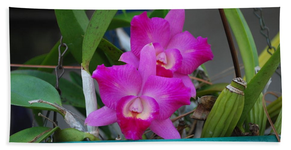 Growing On Patio Hand Towel featuring the photograph Orchid by Robert Floyd
