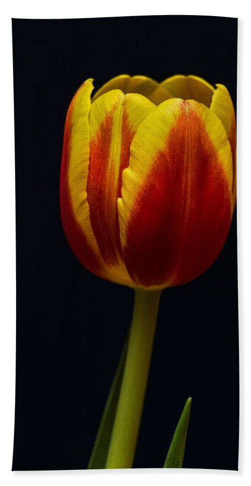 Flower Hand Towel featuring the photograph Tulip by FL collection