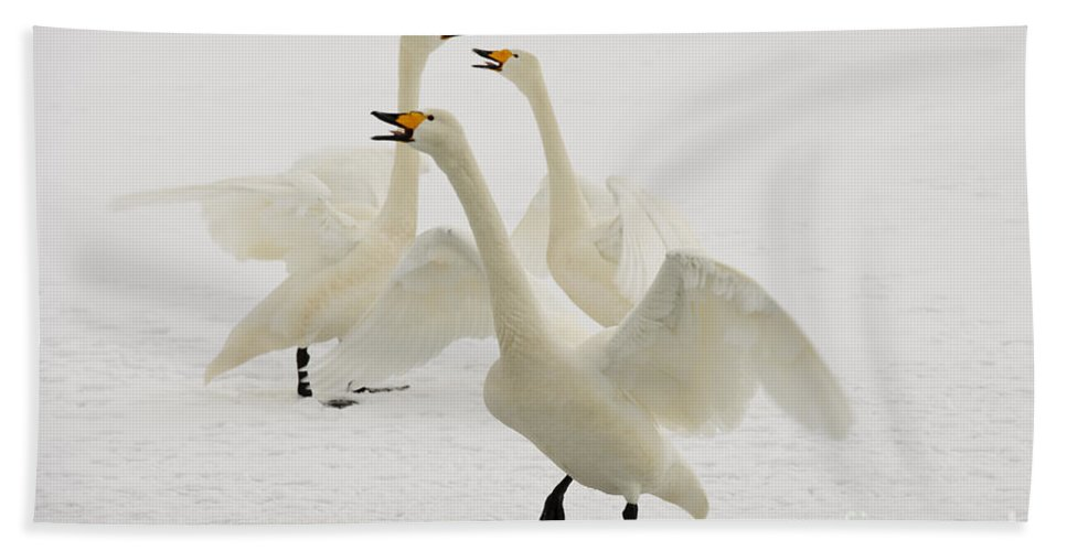 Cygnus Cygnus Bath Sheet featuring the photograph Whooper Swans by John Shaw