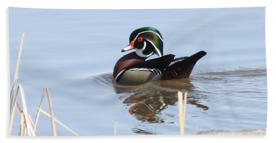 Wood Duck Hand Towel featuring the photograph Wood Duck by Lori Tordsen