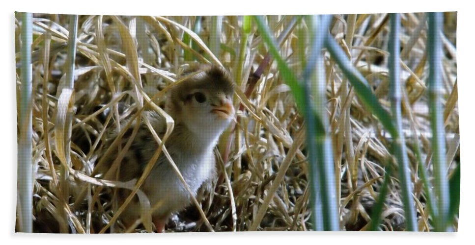 Wildlife Hand Towel featuring the photograph A Baby Quail Looks Back by Jeff Swan