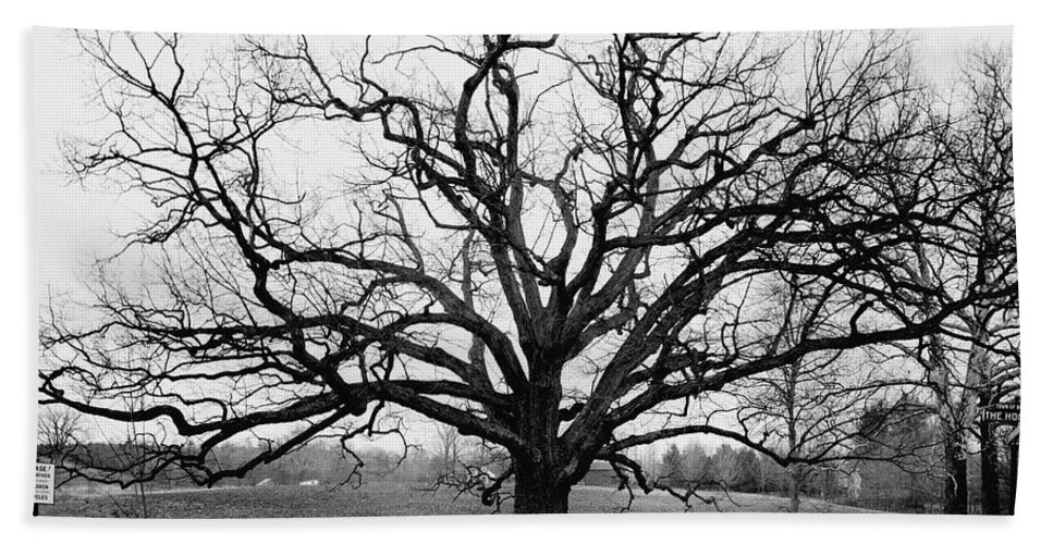 Exterior Bath Towel featuring the photograph A Bare Oak Tree by Tom Leonard