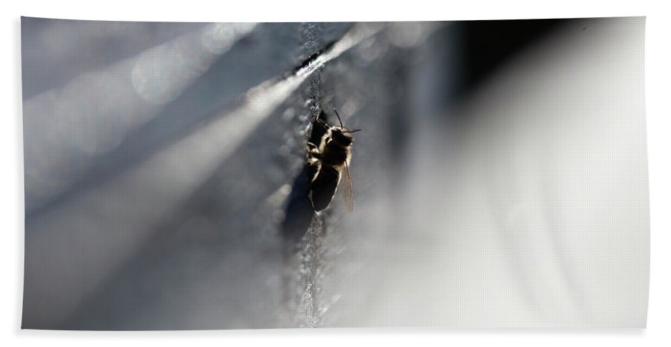 Worker Bee Bath Towel featuring the photograph A Bee Looks From The Entrance by Chico Sanchez