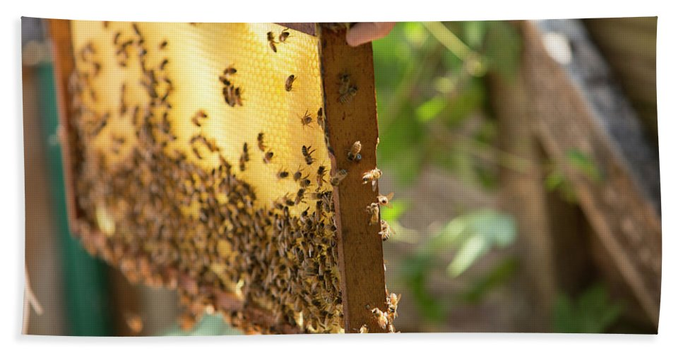 30-34 Years Hand Towel featuring the photograph A Beeswax Honeycomb Frame Crawling by Jared Alden