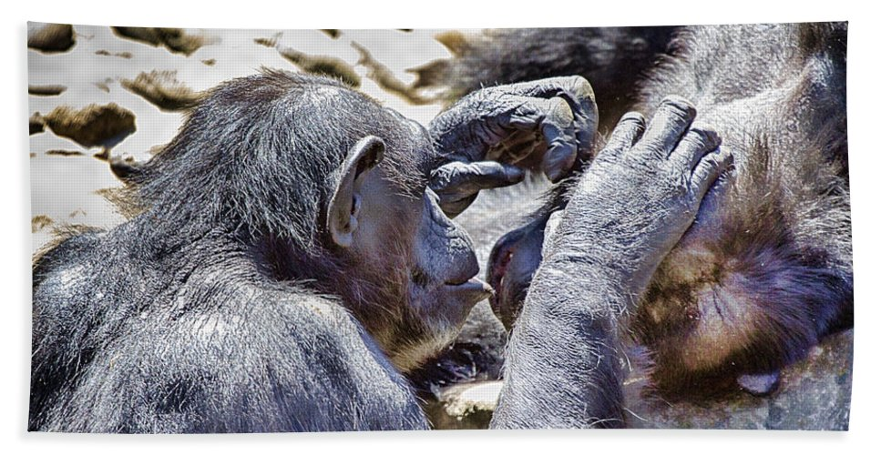 Chimpanzees Hand Towel featuring the photograph A Bit Like Us V4 by Douglas Barnard