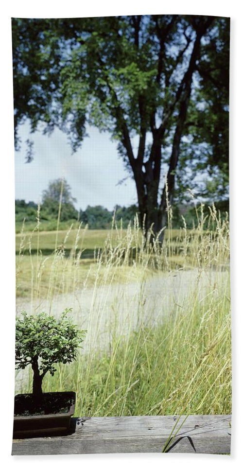 Plants Bath Towel featuring the photograph A Bonsai Tree In A Hayfield by Pedro E. Guerrero
