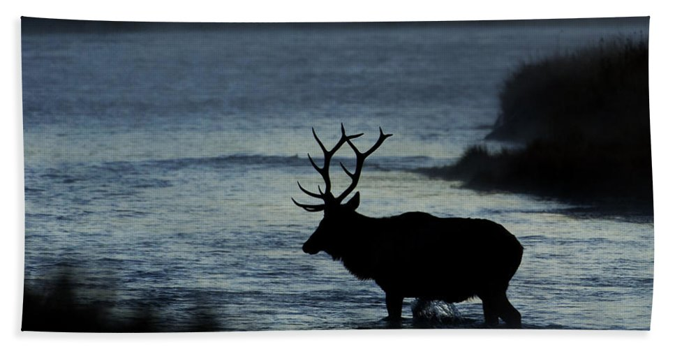 Elk Hand Towel featuring the photograph A Bull Elk Crosses The Madison In The Early Morning by Gary Langley