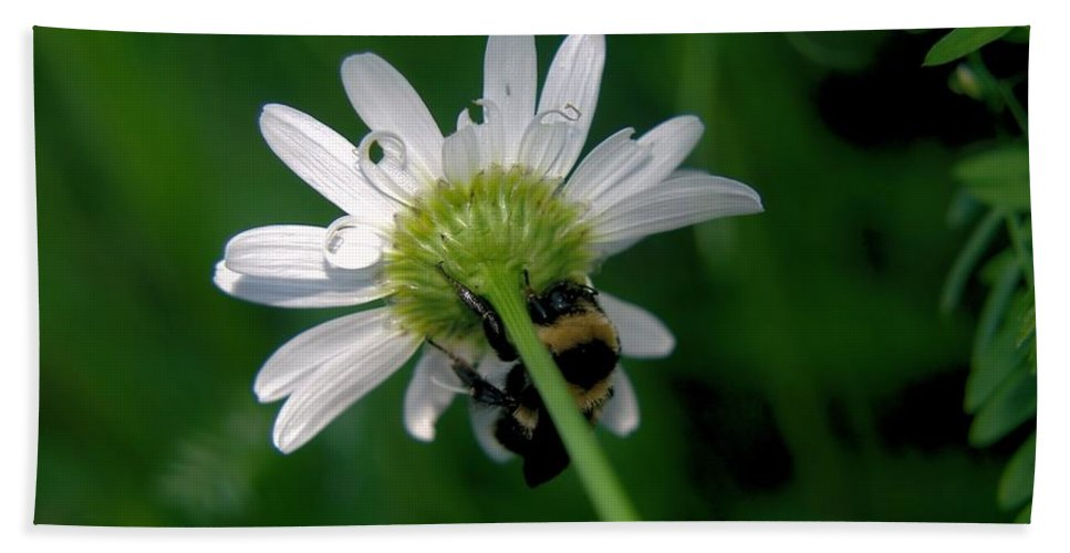 Insects Bath Sheet featuring the photograph A Bumble On The Wrong Side by Jeff Swan