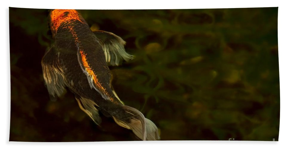 Koi Hand Towel featuring the photograph A Butterfly by Marilyn Cornwell