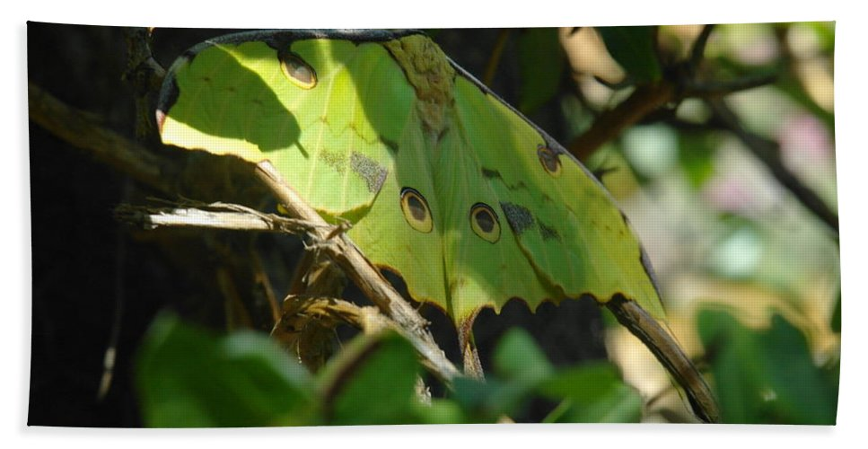 Butterflies Hand Towel featuring the photograph A Buttterfly Resting by Jeff Swan