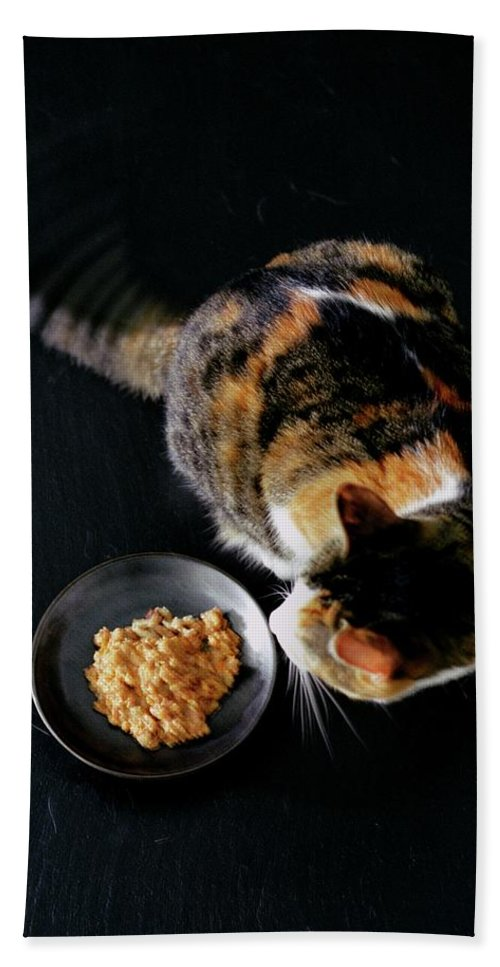 Cat Bath Towel featuring the photograph A Cat Beside A Dish Of Cat Food by Romulo Yanes