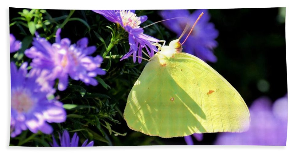 Clouded Sulpher Hand Towel featuring the photograph A Clouded Sulphur On Lavender Mums by Maria Urso