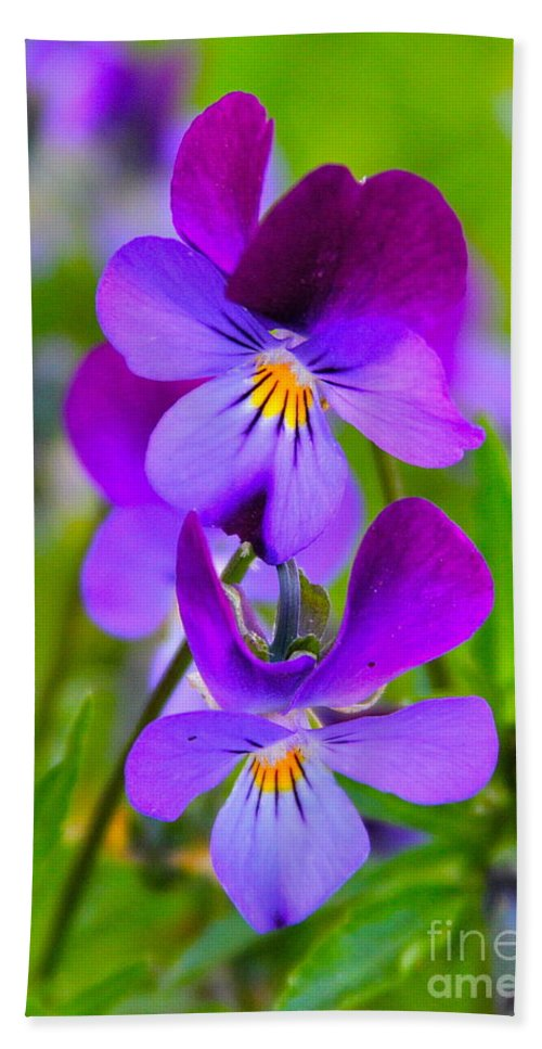 Flower Bath Towel featuring the photograph A Couple Of Pansies by Rick Monyahan
