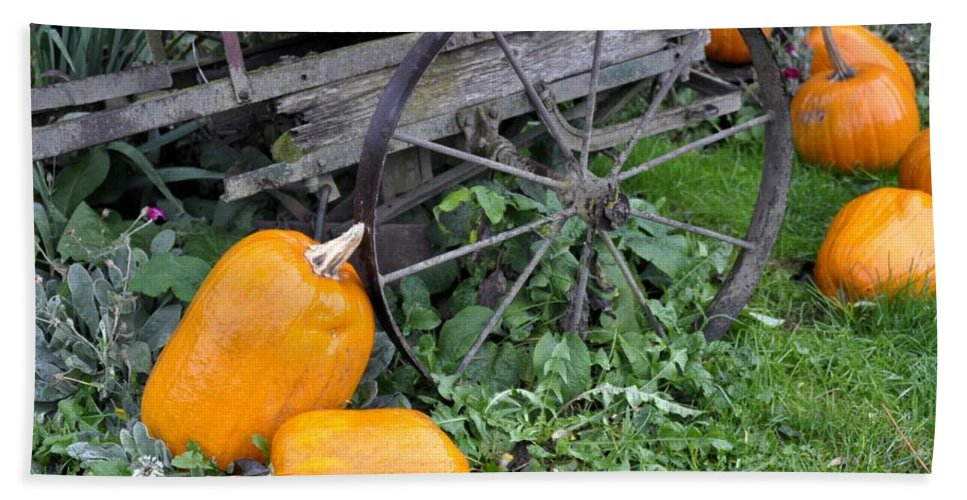 Hood River Bath Sheet featuring the photograph A Crop Of Pumpkins by Image Takers Photography LLC - Laura Morgan