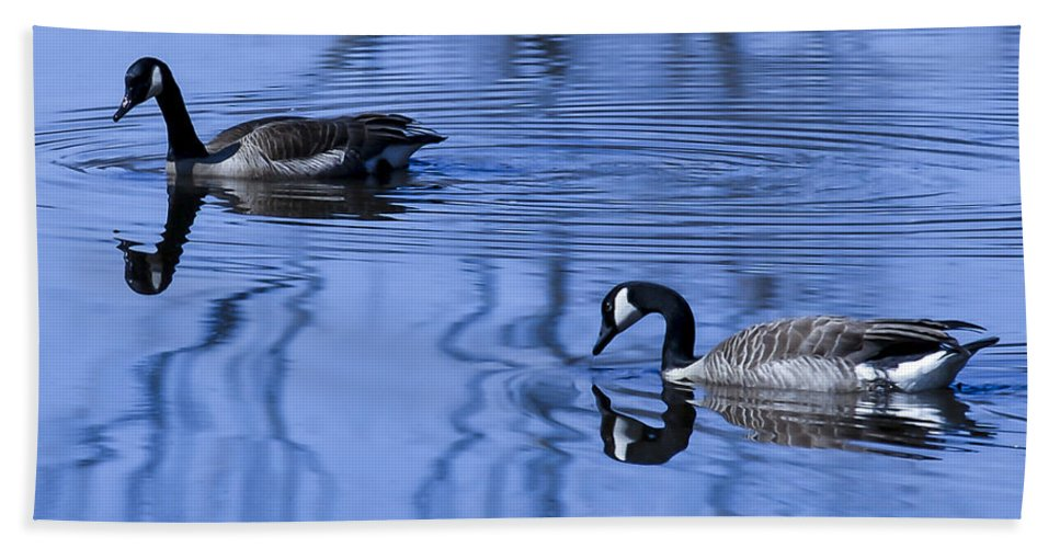 Animal Hand Towel featuring the photograph A Day At The Lake by Jack R Perry