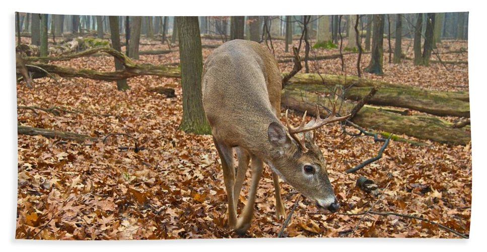 Animal Hand Towel featuring the photograph A Eight Point Buck 1261 by Michael Peychich