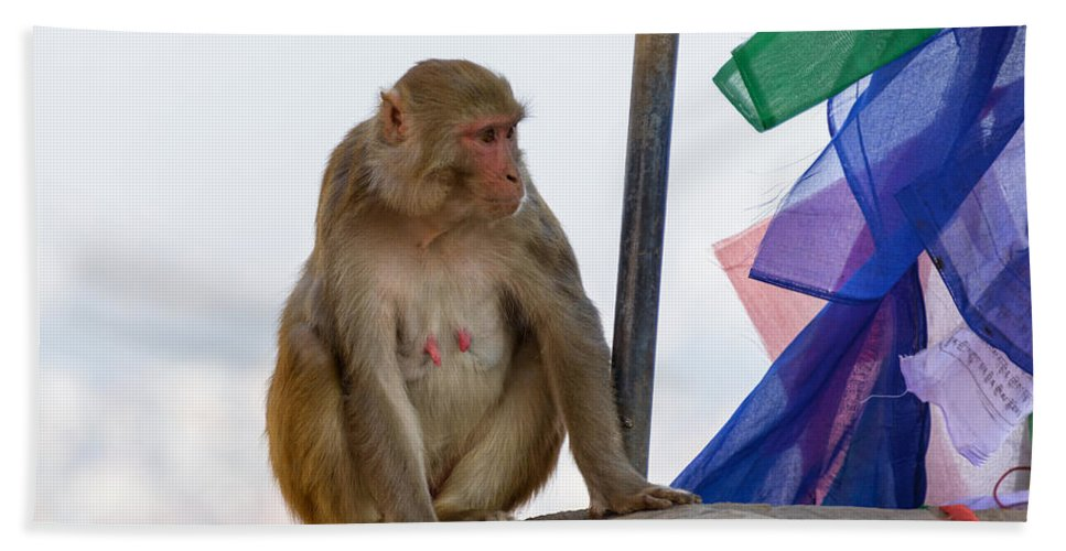 Macaque Hand Towel featuring the photograph A Female Macaque On Top Of Wall by Dutourdumonde Photography