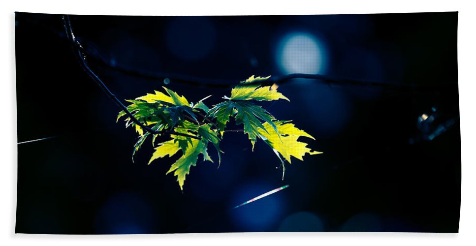 Leave Bath Sheet featuring the photograph A Few Leaves In The Sun by Bob Orsillo