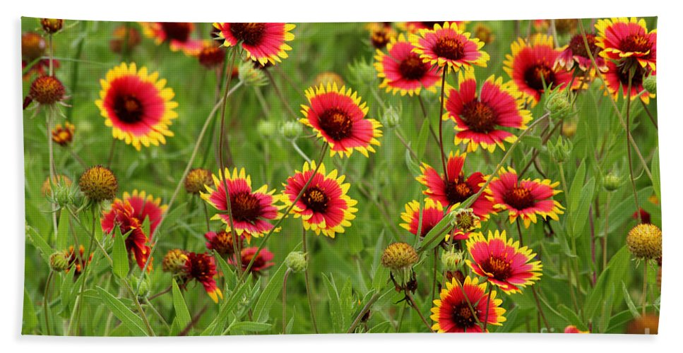 Indian Blanket Bath Sheet featuring the photograph a field of Indian Blankets by TN Fairey
