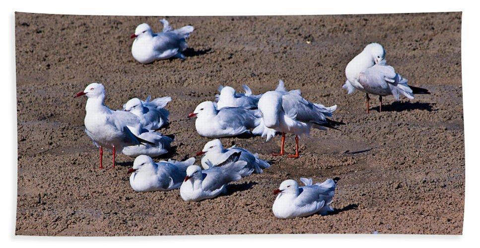 Birds Hand Towel featuring the photograph A Flock Of Seagulls by Darren Burton
