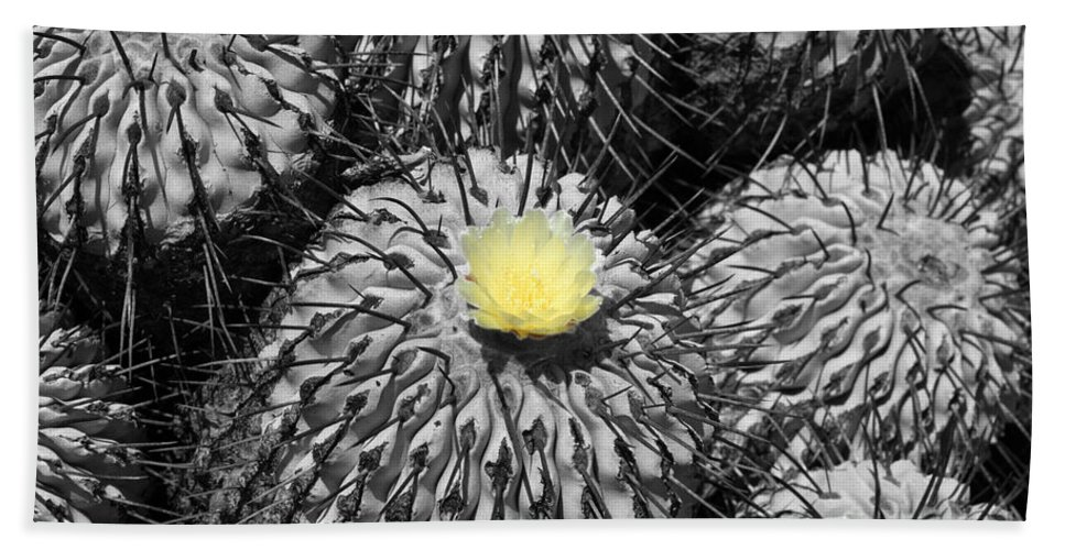 Copiapoa Bath Sheet featuring the photograph A Flower Among Thorns by James Brunker