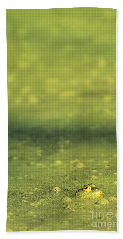 Green Hand Towel featuring the photograph A Frog In Pond Muck by John Harmon