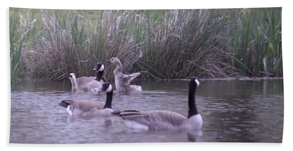 Geese. Gosling Bath Sheet featuring the photograph A Frolicsome Goosling by Jeff Swan