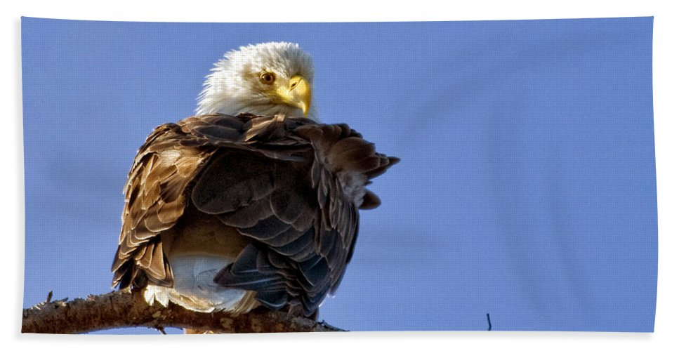 Eagles Hand Towel featuring the photograph A Glance Back by Claudia Kuhn