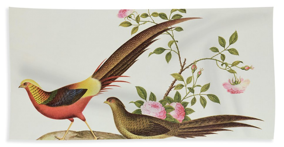 Bird Bath Sheet featuring the painting A Golden Pheasant by Chinese School