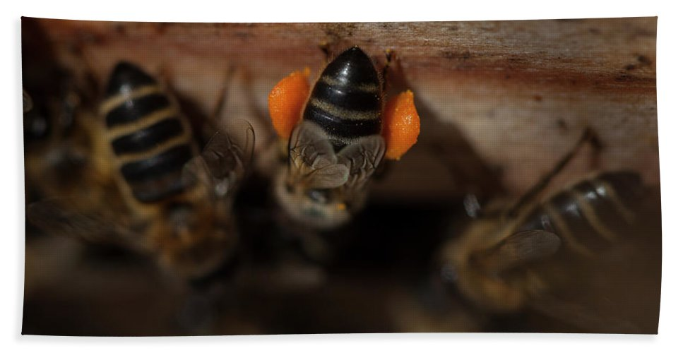 Worker Bee Bath Towel featuring the photograph A Honey Bee Carrying Pollen by Chico Sanchez