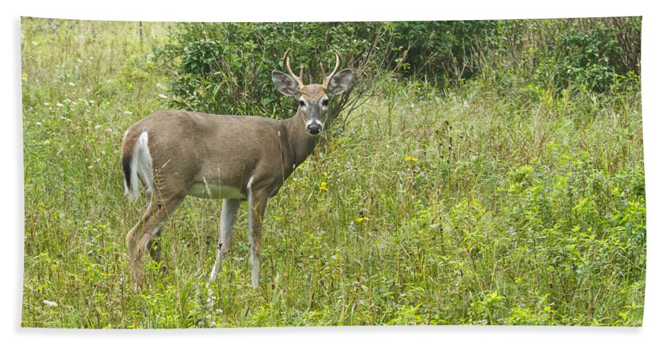 Deer Bath Sheet featuring the photograph A Late Summer's Morning by Michael Peychich