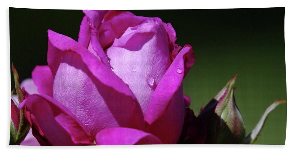 Blue Rose Bath Sheet featuring the photograph A Light Blue Rose by Jeff Swan