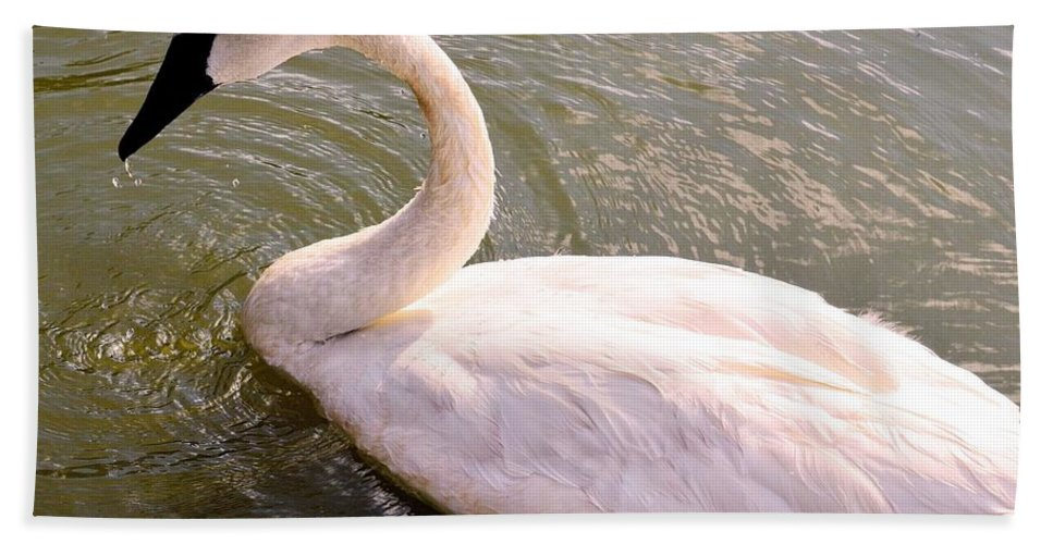 Lone Bath Sheet featuring the photograph A Lone Swan Named Gracie by Maria Urso